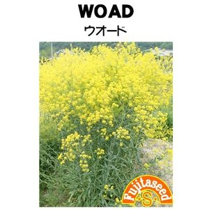 ハーブ タネ 種 ウォード 藤田種子|fujitaseed