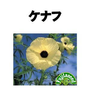 ハーブ タネ 種 ケナフ 藤田種子|fujitaseed
