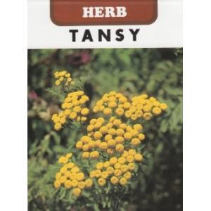 【利用方法】 キク科の多年草です。開花直前にドライフラワーに すると、色持ちが良くなります。強い殺菌...