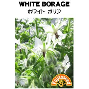 ハーブ タネ 種 ホワイトボリジ 藤田種子|fujitaseed