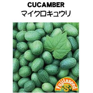 【栽培方法】 春、暖かくなってきた頃よりビニールポットに種まきし、苗を仕立て、本葉3〜4枚の頃に30...