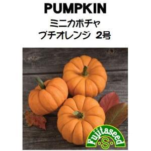 野菜 タネ 種 ミニカボチャ プチオレンジ2号 藤田種子|fujitaseed