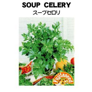 野菜 タネ 種 セロリ スープセロリ 藤田種子|fujitaseed