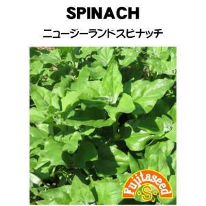 野菜 タネ 種 ニュージーランド・スピナッチ 藤田種子|fujitaseed