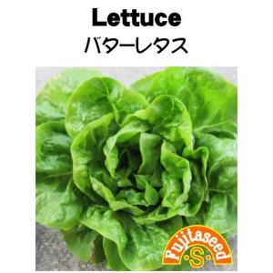 野菜 タネ 種 レタス バターレタス 藤田種子|fujitaseed