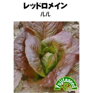 野菜 タネ 種 レタス レッドロメイン ルル(レッドコスレタス) 藤田種子|fujitaseed