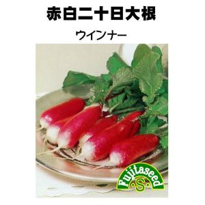 野菜 タネ 種 赤白二十日大根 ウインナー 藤田種子|fujitaseed