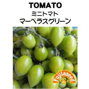 野菜 タネ 種 ミニトマト マーベラスグリーン 藤田種子|fujitaseed