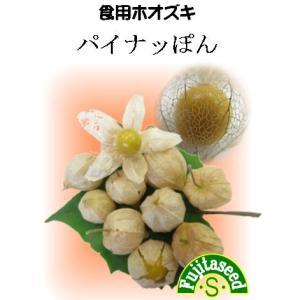野菜 タネ 種 食用ホウズキ パイナッぽん 藤田種子|fujitaseed