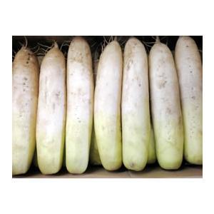 北海道産無農薬・無肥料栽培の完全自然農法だいこん