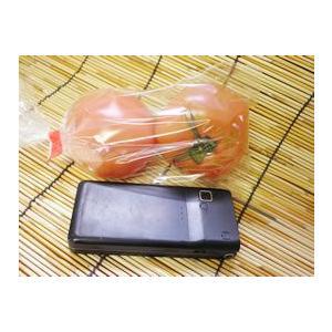 トマト fukinoto