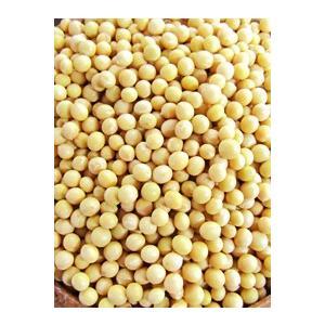 横井さんの間作大豆(1kg)|fukinoto