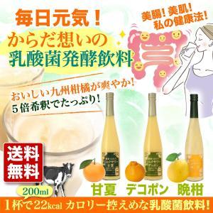 ギフト 2018 九州 甘夏 デコポン 晩柑 ミルクサワー 乳酸菌飲料 5倍希釈 3本 セット|fukuda-farm