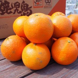 送料無料 無選果 鹿児島タンカン5kg 40玉前後|fukuda-farm