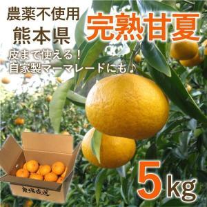 熊本 甘夏 完熟 みかん 5kg 15玉前後 農薬不使用 ご家庭向け 自家製マーマレードにも|fukuda-farm