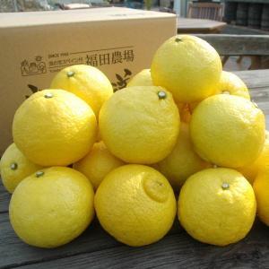 はるか 5kg 熊本 福田農場 20玉から25玉|fukuda-farm