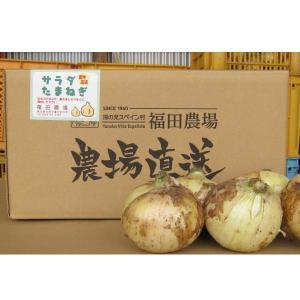 玉ねぎ 熊本 サラタマ Lサイズ以上 玉揃い 秀品 5kg 13玉前後|fukuda-farm