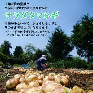 新玉ねぎ 熊本 サラダタマネギ サイズ混合 5kg 15玉前後|fukuda-farm