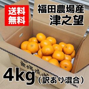 津之望みかん 約4kg 訳あり 送料無料(東北北海道除く)熊本福田農場18玉から20玉前後Lから2Lサイズ|fukuda-farm