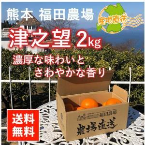 津之望みかん 約2kg 秀品 送料無料(東北北海道除く)熊本福田農場8玉から10玉前後Lから2Lサイズ|fukuda-farm