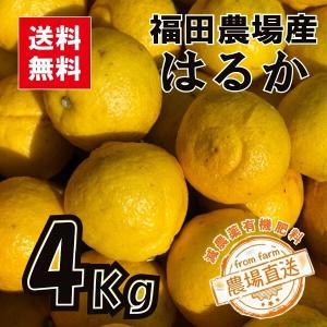 はるか みかん 4kg 秀品 送料無料(東北北海道除く) 熊本 福田農場 15玉から16玉前後 Lから2Lサイズ|fukuda-farm