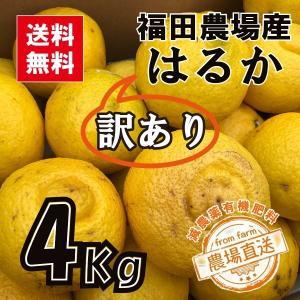 はるかみかん 4kg 訳あり 送料無料(東北北海道除く)熊本福田農場15玉から16玉前後Lから2Lサイズ|fukuda-farm