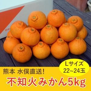 熊本 水俣 不知火みかん5kg Lサイズ 22から24玉 ご家庭向け|fukuda-farm