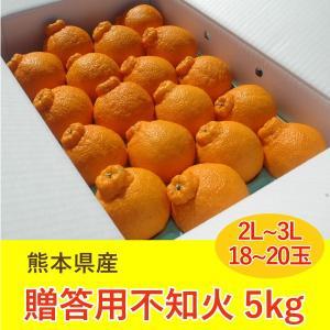 みかん 不知火 熊本産 5kg 2L 3L 18から20玉 ギフト 贈答用|fukuda-farm