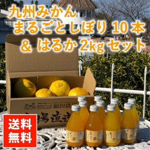 はるか みかん ジュース 100% 送料無料(東北北海道除く) 熊本 福田農場 ストレートジュース 10本 はるか 秀品 2kg セット|fukuda-farm