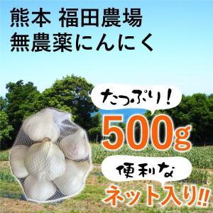 熊本産 にんにく 博多六片 500g 農薬不使用 国産|fukuda-farm