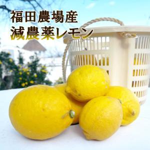 レモン 2kg 福田農場 熊本県産 防腐剤 防かび剤不使用 レモン ご家庭用 少しわけあり 有機肥料栽培|fukuda-farm