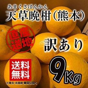 訳あり 天草晩柑 9kg 産地直送 福田農場|fukuda-farm