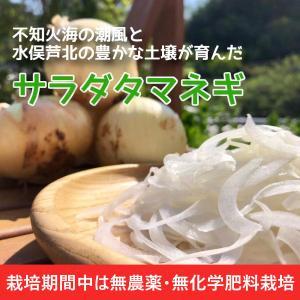 玉ねぎ サラ玉 サラダタマネギ 熊本県 水俣産 サイズ混合 家庭用 4kg 約20玉前後|fukuda-farm