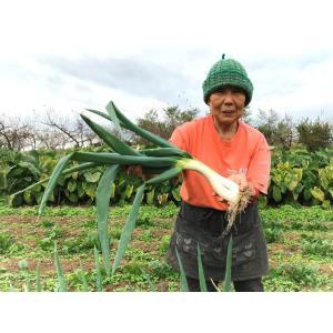 自家製こうじ味噌 500g×5個セット 完全無添加 天然塩使用 農家の手仕込み 阿部農縁|fukufukugenki