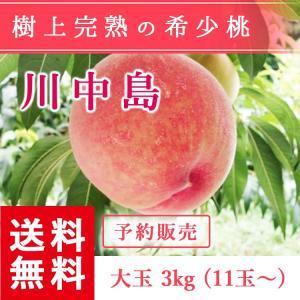 福島県産 桃 もぎたて完熟 川中島 大玉 約3kg 11〜玉 送料無料 阿部農縁 産地直送 もも モモ|fukufukugenki