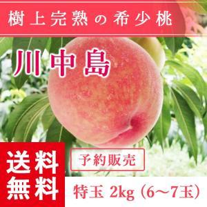 福島県産 桃 もぎたて完熟 川中島 特玉 約2kg 6〜7玉 送料無料 阿部農縁 産地直送 もも モモ|fukufukugenki