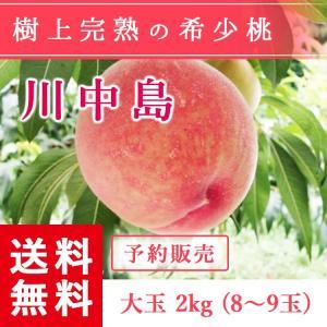 福島県産 桃 もぎたて完熟 川中島 大玉 約2kg 8〜9玉 送料無料 阿部農縁 産地直送 もも モモ|fukufukugenki