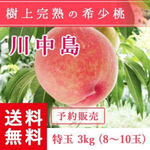 予約販売 福島県産 桃 もぎたて完熟 川中島 特玉 約3kg 8〜10玉 送料無料 阿部農縁 産地直送 もも モモ|fukufukugenki
