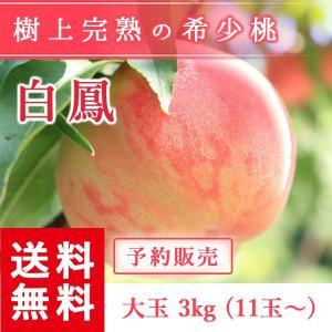 予約販売 福島県産 桃 もぎたて完熟 白鳳 大玉 約3kg 11玉〜 送料無料 阿部農縁 産地直送 もも モモ|fukufukugenki