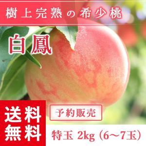 予約販売 福島県産 桃 もぎたて完熟 白鳳 特玉 約2kg 6〜7玉 送料無料 阿部農縁 産地直送 もも モモ|fukufukugenki