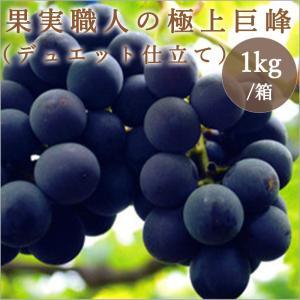 果実職人の極み 巨峰1kg|fukufuru