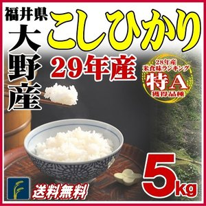 お米 米5kg 福井県大野産コシヒカリ 5kg 特A 白米 29年産 送料無料|fukuikomeya