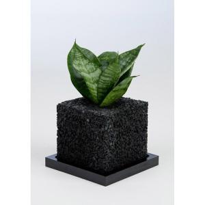 eco-pochiキューブくろゼラニカ|fukumimi-shoten