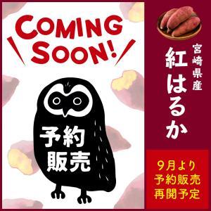 「増量キャンペーン」さつまいも 紅はるか 2kg 宮崎 県産 サツマイモ 生芋 fukunowa 02