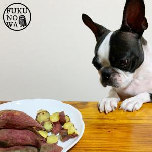 【送料無料】ペットのおやつ さつまいも 紅はるか 1kg 宮崎県産 熟成サツマイモ 生芋|fukunowa|05