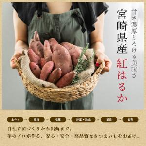【送料無料】ペットのおやつ さつまいも 紅はるか 3kg 宮崎県産 熟成サツマイモ 生芋 fukunowa 03