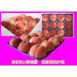 あかつき 自家用 まるせい果樹園の桃|fukushimamarusei