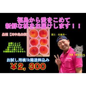 まるせい果樹園 川中島白桃 お試しサイズ|fukushimamarusei