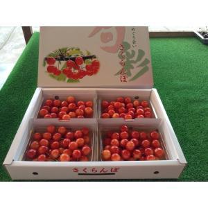 まるせい果樹園 さくらんぼ 佐藤錦 250g×4p入 ふぞろい|fukushimamarusei