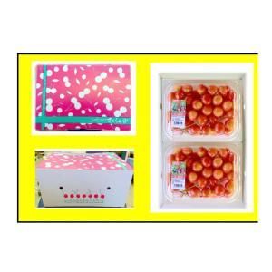 まるせい果樹園 さくらんぼ佐藤錦Mサイズ200g×4P入 |fukushimamarusei